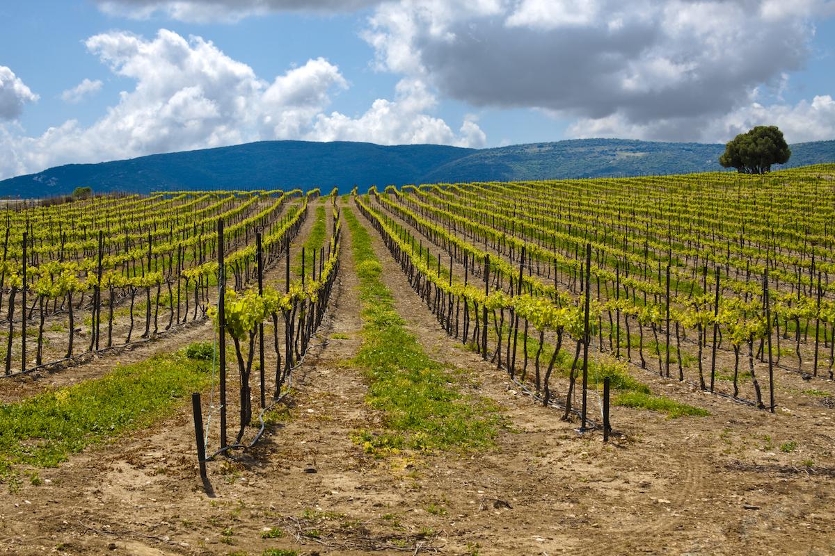 wine country DELBHC8